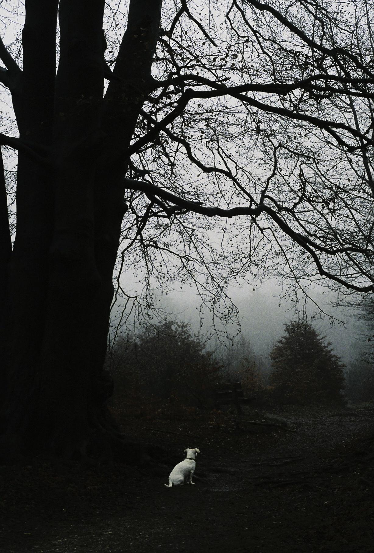 HexarRF_Portra800-2